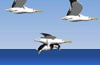 Pinguin meppen 09