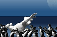 Pinguin Meppen 13