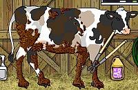 Limpeza de Vaca