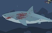 Haaien leven