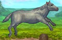 Meu Cavalo Bravo