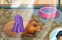 Meu Hamster Pequeno
