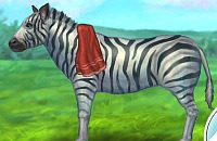 Zebra Pflege
