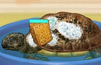 Schildkröte Pflege