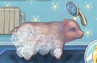 Schwein Pflege