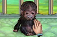 Meu Macaco