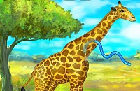 Giraf Verzorgen