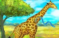 Girafa Zoo