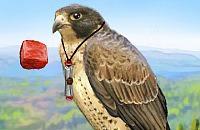 Brave Falcon