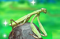 Inteligente Mantis