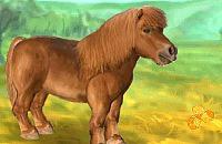 Mein Lieber Pony