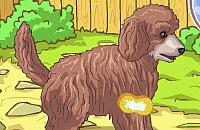 Cachorro Caniche de Bonito