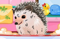 Cute Hedgehog Care