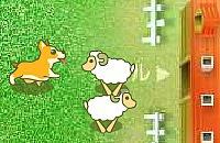 Sheep Shepherd