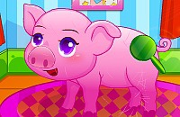 Pet Piggy Care