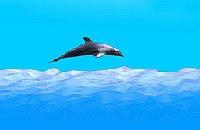 Dolfijnen Race