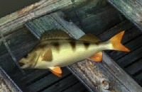 Sport Vissen