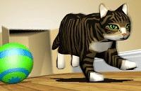 Box Cat Bowling