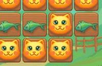 Katzen Hunger