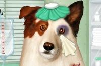Doctor Para Dog