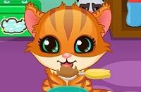 Giochi di Gatti
