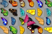 Schmetterling Kyodai