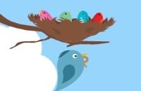 Alimentar Os Pássaros