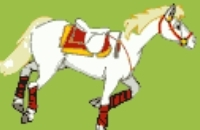 Horse Gym