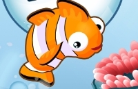 Fisch 'N Jump
