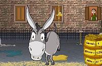 Naughty Donkey