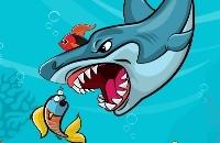 Fetter Hai