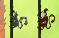 Affen Seile Party