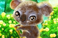 Koala Felice