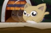 Gato Rodante