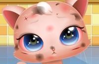 Süße Kitty Pflege