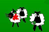 Shoot on Sheeps