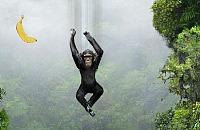 Falling Monkey