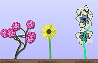 Bloemen Kwekerij