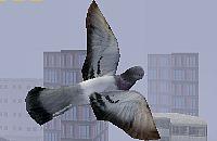 Fly Like a Bird 2