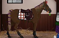 Droom Paard
