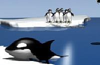 Pinguin meppen 02
