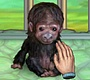 Play the new Girl Flash Game: My Funny Ape