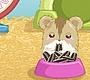 Speel het nieuwe girl spel: Hamster Liefde