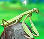 Play the new Girl Flash Game: Smart Mantis