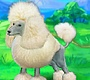 Play the new Girl Flash Game: Clever Poodle