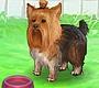 Speel het nieuwe girl spel: Schattig Hondje