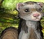 Play the new Girl Flash Game: Funny Ferret