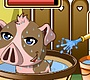 Play the new Girl Flash Game: Pet Piggy