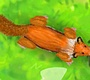 Play the new Girl Flash Game: Lucky Fox
