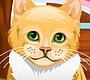 Speel het nieuwe girl spel: Lief Katje Verzorgen